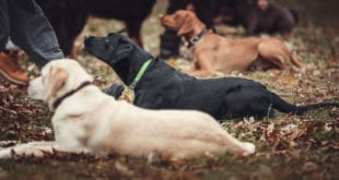 kommandos-fuer-den-hund