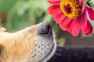 garten-hund