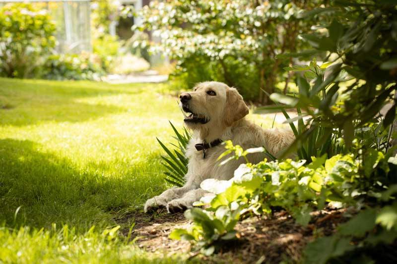 geeignete Gartenpflanzen hund
