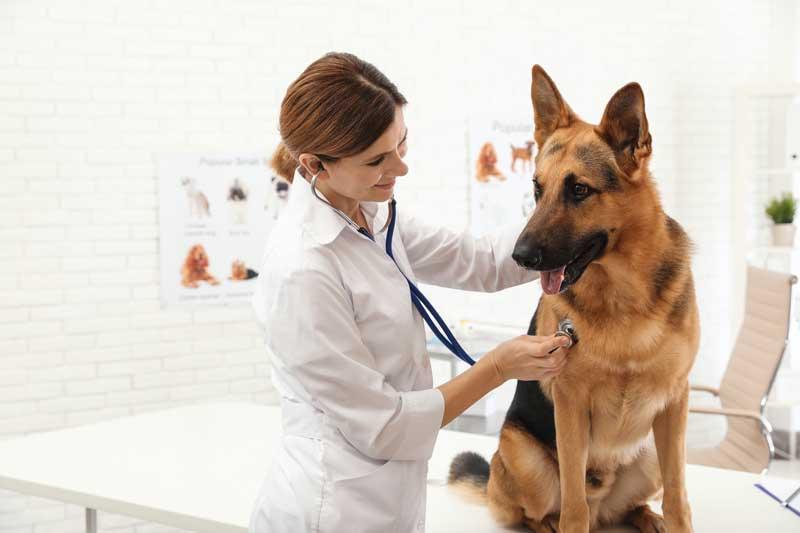 Spätestens bei Tierarzt muss der Hund auch mal angehoben werden