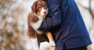 hund-richtig-hochheben