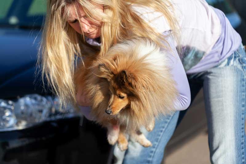 Ist ein Hund verletzt, ist es gut wenn er das Anheben kennt
