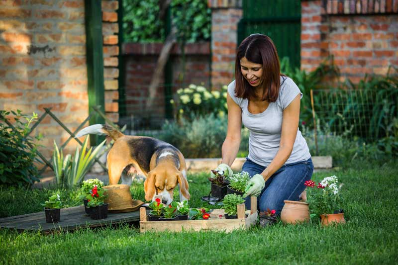 geeignete Pflanzen für den Hundegarten