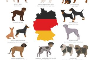 deutsche-hunderassen