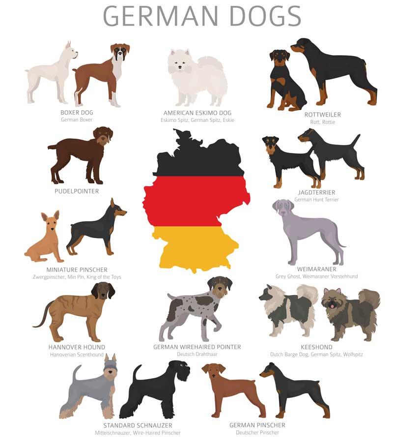 deutsche Hunderassen