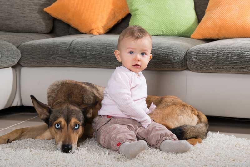 Baby und hund