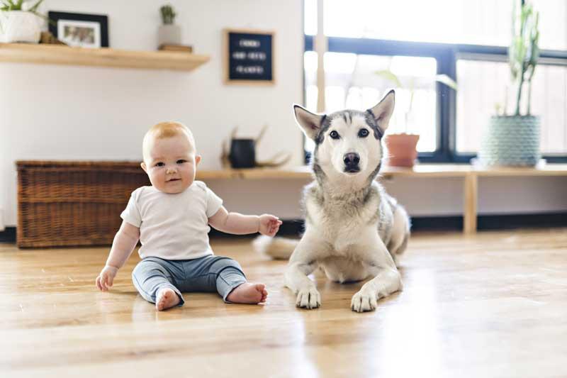 hund und baby im alltag