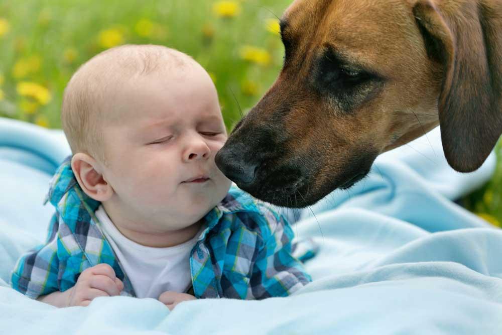 hund-und-baby