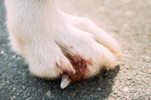 krallenverletzung-hund