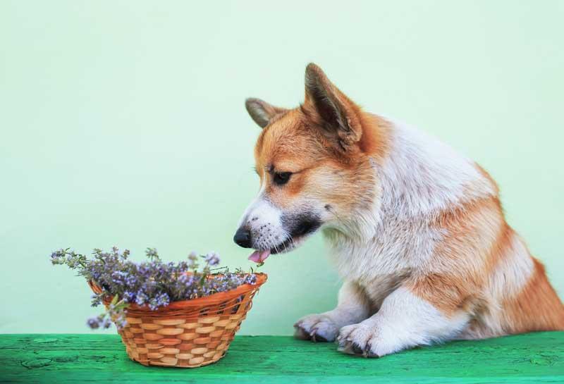 naturheilmittel hund