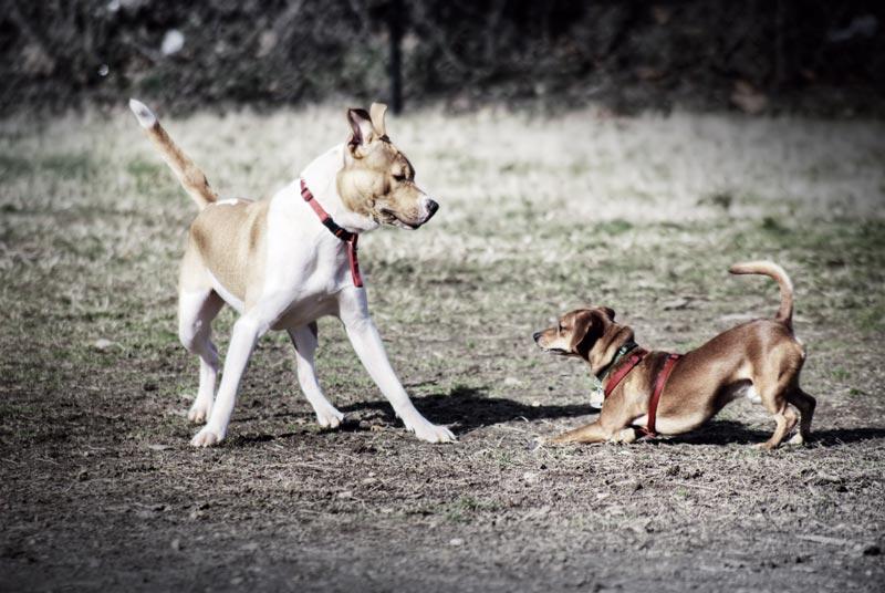 hunde spielen schwanz zeigt freude