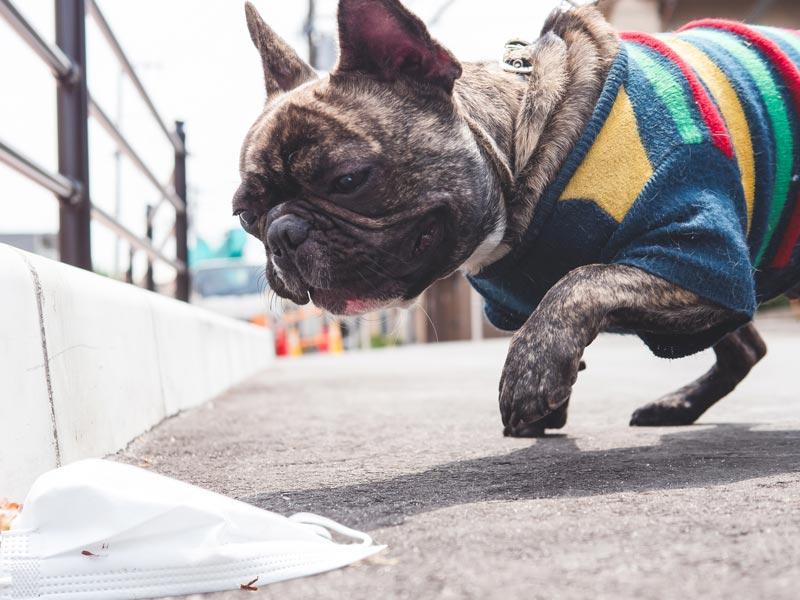 stoffmaskengefahr-fuer-hunde
