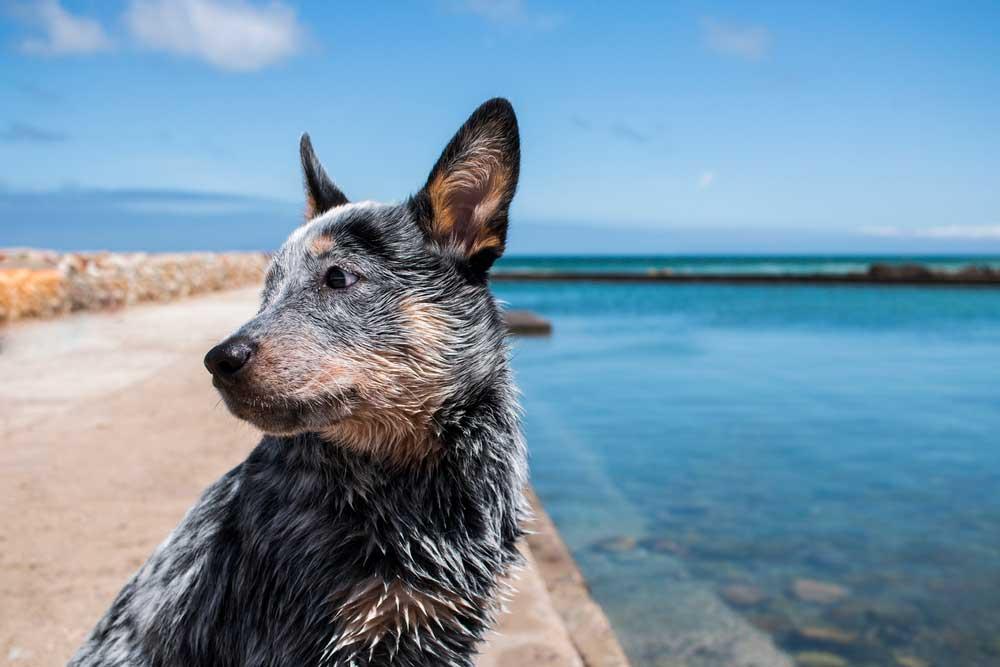 Calming-Signals-hund