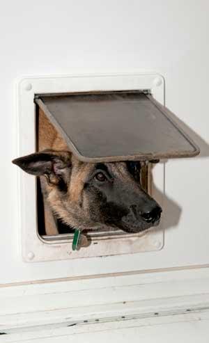 hundeklappe-schaeferhund