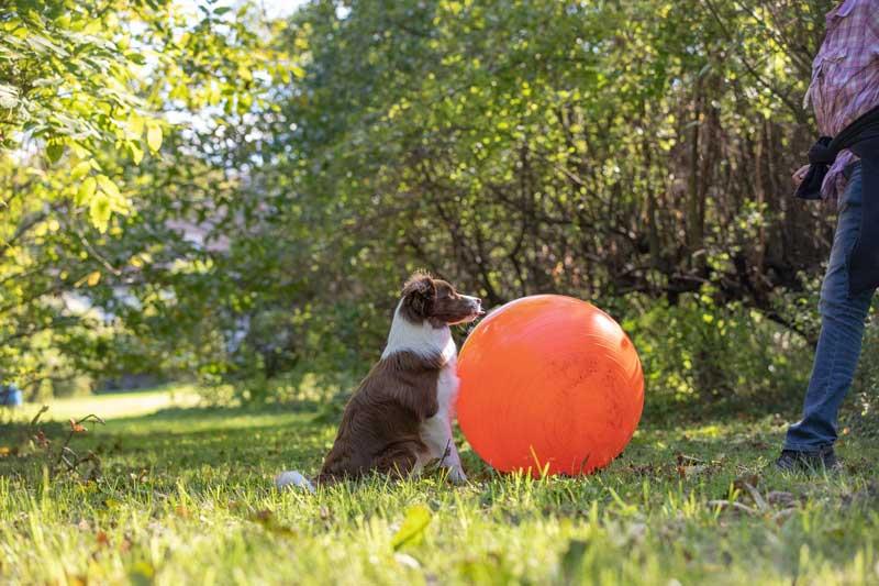 treibball-hund-anfang
