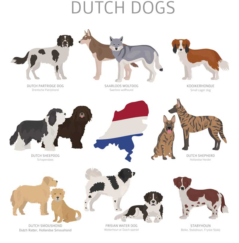 hollaendische-hunderassen