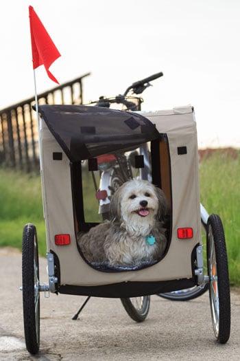 hund-im-fahrradanhänger