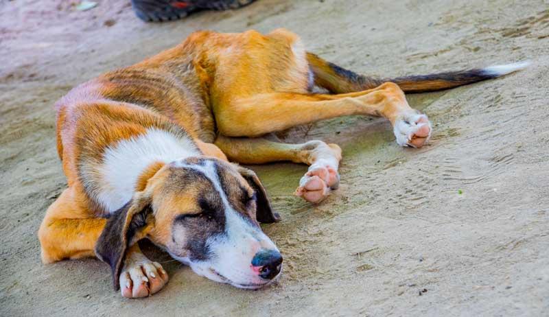 hund-streuner-tierschutz